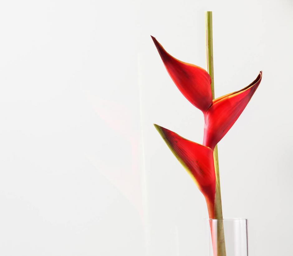 Glassby wandbekleding glanzend white soft